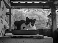 公園のネコ - モノクロ写真をアップする!