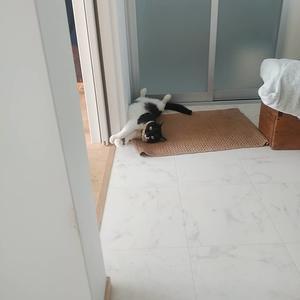 臨時休業。 - 古道具ときどき猫。