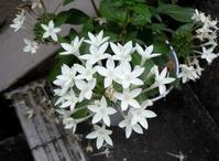今咲いている花、これから咲く花 - 大屋地爵士のJAZZYな生活