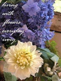 やっと晴れましたね〜♪ -  Flower and cafe 花空間 ivory (アイボリー)