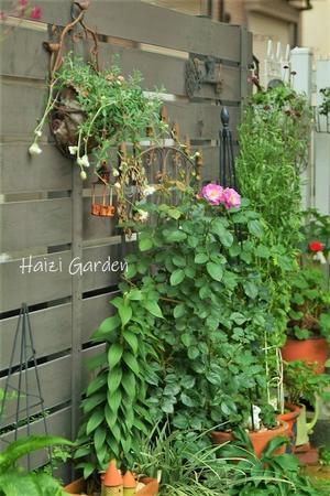ライラックビューティーとスワンレイク&映画『アド・アストラ』 - ハイジの玄関先ガーデン エピソード2♪