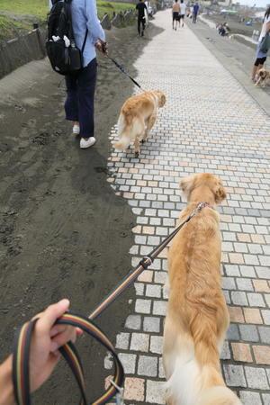 アンちゃんと外面ジャイ子♪ - ハナ&ララとお散歩!