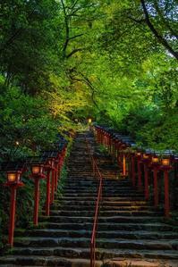 貴船神社~七夕笹飾りライトアップ2020 - 鏡花水月