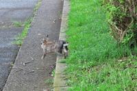 ウサギさんが走った! - ぶらり散歩 ~四季折々フォト日記~