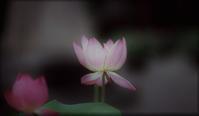 花開く - feel a season