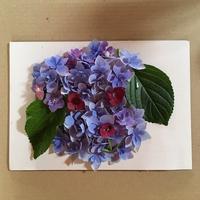 紫陽花物語・・・ - Talklab☆ニコのちゅーす!