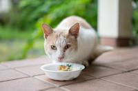 気の荒い薄茶白ちゃん - 猫と夕焼け