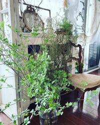 ドウダンツツジと雲竜柳でさわやかな部屋。 - フレンチシックな家作り。Le petit chateau