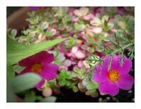 庭の元気色と6月紫陽花 - あおいそら
