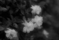 甘い香り - feel a season