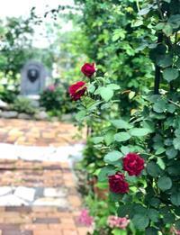バラ越しに見える風景♡ - 薪割りマコのバラの庭