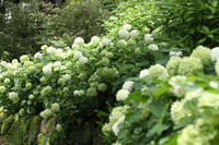 lime green - 写真の記憶