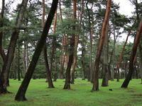 敷島公園 黒松林 (2020/7/6撮影) - toshiさんのお気楽ブログ