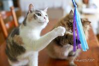 シニア猫?もスーパー猫友に夢中 - きょうだい猫と仲良し暮らし