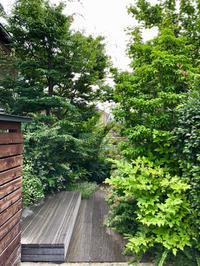雑木/庭木手入れ - 三楽 3LUCK 造園設計・施工・管理 樹木樹勢診断・治療