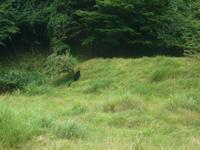 クマの親子 - 三岳山麓自然日記