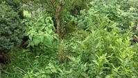 草取り&根切り - ウィズコロナのうちの庭の備忘録~Green's Garden~