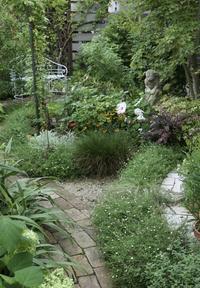 咲き出した夏の花〜 - miyorinの秘密のお庭