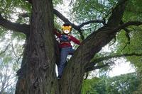 蜜を避けてピクニック ~Picknick im Treptower Park~ - チーム名はファミリエ・ベア ~ハイジが記すクマ達との日々~