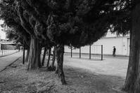 07.18雨天曇天が続く - photolog-ミヤコワスレ