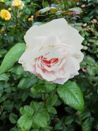 梅雨寒の土曜日に - 小庭の園芸日記