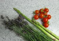 美味しい庭 - 昭和ラボラトリー
