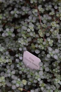 葉っぱと観葉植物 - ヒバリのつぶやき