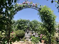 セルフクリーニングするバラ、しないバラ🌹 - 薪割りマコのバラの庭
