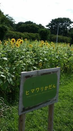 大阪の吉村知事さん、こんなになっちゃって、人気者だなぁ - 二子玉川の風を読む