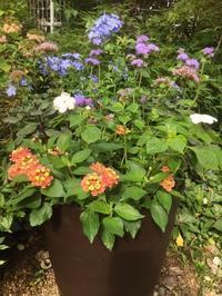 7月の庭No.1 - グリママの花日記