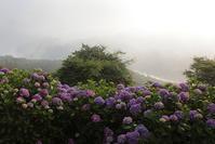 秩父美の山公園朝日の中のアジサイと雲海ラスト - 日本あちこち撮り歩記