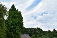 もうすぐ梅雨明けかな... - 三岳山麓自然日記
