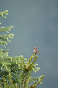 高山へ走る - healing-bird