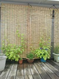 夏の風情 - 静岡  清水  沼津(しぞーか) 木組みの家