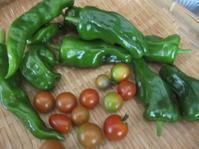 朝一番に野菜を採りに庭へ - 花の自由旋律