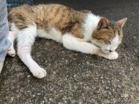 チコにお昼寝時流して良いと許可をもらった曲シリーズ #7 - COMPLEX CAT