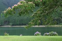 合歓の花 - 木洩れ日 青葉 photo散歩