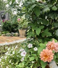ファウンテンのお掃除♡とバラの剪定と枝抜き♫ - 薪割りマコのバラの庭