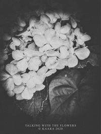 * 石の花 - Kaara's Eye