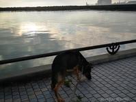 クララ送って八戸小旅 - Photo Album