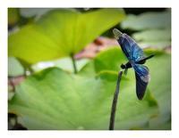花と蝶とんぼ - あおいそら
