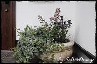 gardening&お弁当 - Salt&Orange時々Pepper