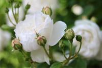 グラミスキャッスル2020*プレミアム商品券 - my small garden~sugar plum~