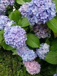 花のように美しく✨✨ - その人がその人らしく生きること ~黒魔女EMIKOのスピリチュアルLesson