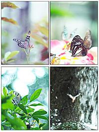 温室の蝶々 - きのう・今日・あした