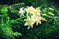 綺麗な花にはご用心! - *la nature*