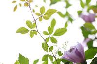 花と犬 - 写真の記憶