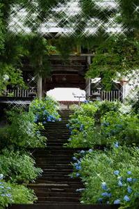 長野そぞろ歩き・飯山:あじさい寺・高源院(2) - 日本庭園的生活