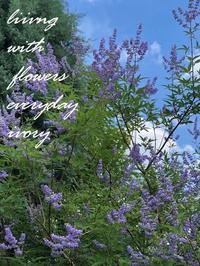 おはようございます。 -  Flower and cafe 花空間 ivory (アイボリー)