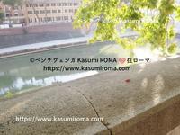 「不思議なてんとう虫の訪問♪」@とりとめのない話 - 『ROMA』ローマ在住 ベンチヴェンガKasumiROMAの「ふぉとぶろぐ♪ 」